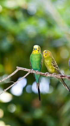 .I love little budgies they always look so happy.