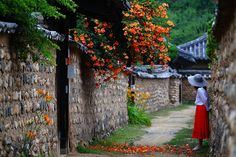 비가 오는 날  능소화 골목 Korean Traditional, Traditional House, Beautiful Homes, Beautiful Places, Indochine, All Nature, Belleza Natural, Flowering Trees, Cool Landscapes