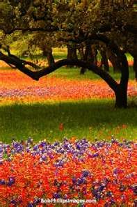 Spring In Texas is a beauty to behold- Bluebonnets, Indian paintbrush, coreopsis