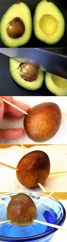 How to grow an avocado From pit. If this actually works I will be the happiest girl!