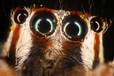 Murat Yilmaz- Astonishing Insect Life Photography