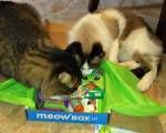 Cat Lover Products - These are mostly for the kitties in your life...