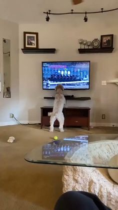 Cute Funny Dogs, Cute Funny Animals, Cute Baby Animals, Cute Animal Videos, Funny Animal Pictures, Funny Dog Videos, I Love Dogs, Animals Beautiful, Cute Puppies