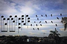 Foto de pássaros vira música | O TRECO CERTO