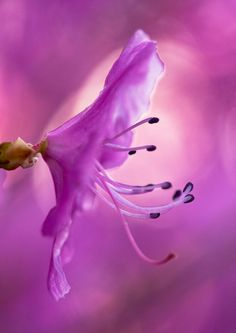 """Pink Dress"" by Camilla Noresson. Macro of a pink flower."