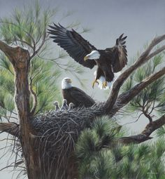 """Eagle's Nest""....by Terry Isaacs"
