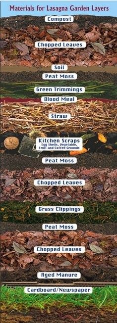 Lasagna Gardening Layers - No Dig Gardening! Just layer and plant - this creates it's own soil even where there is none.       Graphic by H...