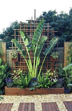 Tropical Backyard, Tropical Landscaping, Backyard Landscaping, Landscaping Ideas, Backyard Ideas, Garden Ideas, Patio Ideas, Palm Trees Landscaping, Courtyard Ideas