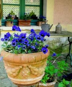 """""""Brise-Brise"""" de croche nas janelas e Amor Perfeito no jardim: muito lindo!"""