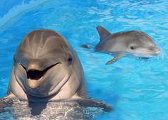 Dolphin Baby at Sea Life Park Hawaii