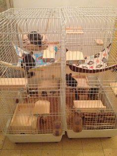 Chinchilla cage ideas