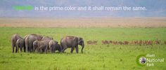 "Here's to the new week — ""GREEN"" is the prime color and it shall remain the same. ‪#‎Quoteoftheweek‬ ‪#‎GoGreen‬ ‪#‎CorbettNationalPark‬"