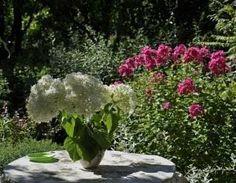 Como fazer um herbicida caseiro