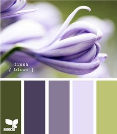 purple and green colour palette - the three colours on the right