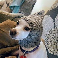 Ravelry: Pointy Dog Hat pattern by Jenya Rose Crochet Dog Hat Free Pattern, Knitting Patterns For Dogs, Knitted Dog Sweater Pattern, Snood Pattern, Crochet Snood, Knit Dog Sweater, Dog Clothes Patterns, Dog Pattern, Dog Sweaters