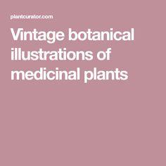 Vintage botanical illustrations of medicinal plants