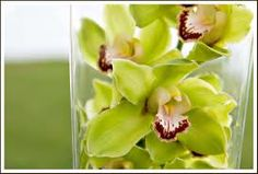 Green cymbidium orchids are so beautiful by themselves submerged in a vase, or as a wired accent to any arrangement. And they come in a mini version, great for boutonnieres and corsages!  www.halfyarddesigns.com