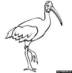 australian white ibis coloring page free australian white ibis online coloring
