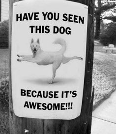 Awesome dog is awesome!
