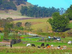 Para esclarecer todas as dúvidas sobre o Cadastro Ambiental Rural (CAR).