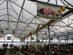 Proven Winners at Calloway's Nursery in North Plano Proven Winners, This Is Us, Fair Grounds, Nursery, Garden, Flowers, Plants, Travel, Garten