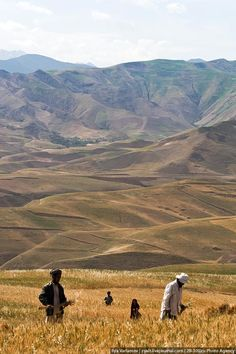 Afghanistan has never had especially developed agriculture. Because of the harsh climatic conditions and shortage of land, peasants could barely feed only themselves.