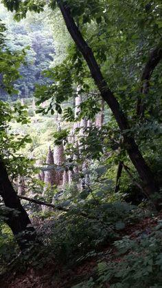 남한산성 돌다 발견한 돌탑