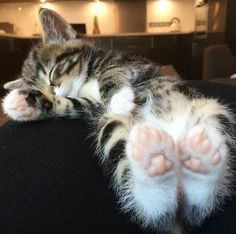 Kitten feet. Feet with pink beans. How delightful. Just want to kiss them