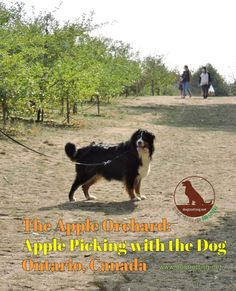 Take your dog apple picking: 6 Southern Ontario Pet-Friendly Farms