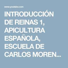 INTRODUCCIÓN DE REINAS 1, APICULTURA ESPAÑOLA, ESCUELA DE CARLOS MORENO - YouTube
