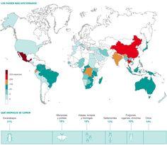 Alimentarse a base de insectos. Los países más aficionados a alimentarse de insectos y las especies más cotizadas