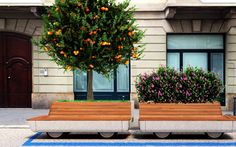 Árvores de rodinhas para mais verde e qualidade de vida nas cidades – Planeta Sustentável