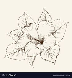 Flower of mallow Royalty Free Vector Image - VectorStock Easy Flower Drawings, Easy Disney Drawings, Pencil Drawings Of Flowers, Easy Doodles Drawings, Flower Sketches, Hibiscus Drawing, Hibiscus Flower Tattoos, Sunflower Drawing, Butterfly Drawing