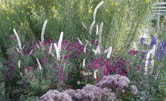 purpursonnenhut staude echinacea purpurea pflanze purpur. Black Bedroom Furniture Sets. Home Design Ideas