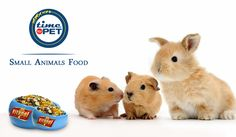 Find the right food and the right brand for your pets.  Get 10% Off on small animal food products at Timeforpet. Buy Now: https://goo.gl/jwplzt #timeforpet #buyonline #petstore #buynow #guineapigfood #guineapig #smallanimals #animallove #animals #pets #petlove #petcare #petfood #pet #bangalore #saturday #weekend