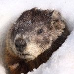 20 interesting facts about GroundHog Day!!