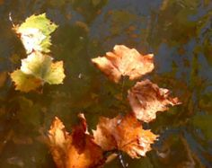 gold brown orange leaves - Google Search