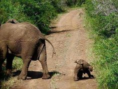 Oh my heart my lovely cutie..!!  From : @iloveelephant262 -  . . For info about promoting your elephant  art or crafts send me a direct message @elephant.gifts or email elephantgifts@outlook.com  . Follow @elephant.gifts for beautiful and inspiring elephant  images and videos every day! . #elephant #elephants #elephantlove