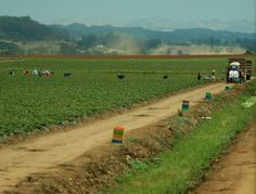 Study finds autism risk higher near pesticide plant.   http://www.environmentalhealthnews.org/ehs/news/2014/jun/autism-and-pesticides