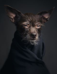 """I tried to photograph the animals as humans, depicting their emotion and human-like characteristics in a sombre way,"""" Lagrange told Yatzer. Description from truth-code.com. I searched for this on bing.com/images"""