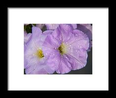 Lavender Framed Print featuring the photograph Lavender Love by Janis Kirstein