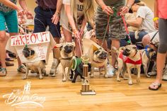 Pugoween 2015 DFW Pug Rescue #puglife #dfwpugrescue #thanks4yoursupport #halloween