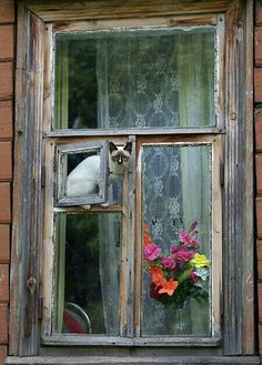 Flower Cat - she has her own personal window.