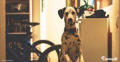 Todo lo que debes saber antes de tener un #perro en #casa.  #Lamudi #Blog