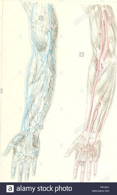 The Human Skeleton Diagram Fill In Blanks Engine Wiring Harness Labeled Back View | Study Anatomy, Physiology,
