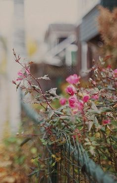 Roses on informal wire fence Bokeh Photography, Color Photography, Grandmas Garden, Autumn Aesthetic, Rose Bush, Climbing Roses, Garden Fencing, Fresh Flowers, Cool Pictures