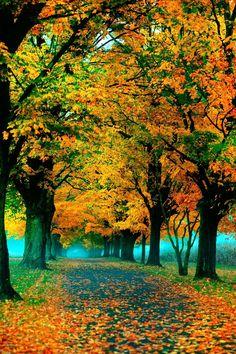   October   Golden Glow Trees & Turquoise Mist