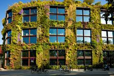 """<p dir=""""ltr"""">Plant-covered walls could slash air pollution in some city streets, recent research suggests.</p>"""