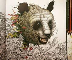 Image result for kerby rosanes imagimorphia panda