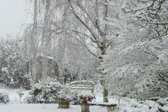 Garden in winter....